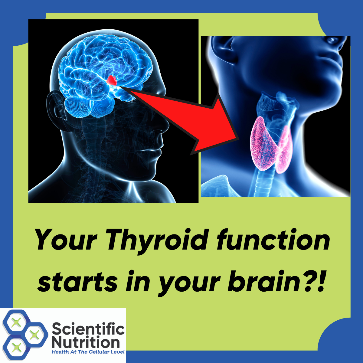 You are currently viewing What if your TSH thyroid is normal but you have slow thyroid symptoms❓