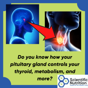 How does TSH start in the pituitary to make thyroid hormones?