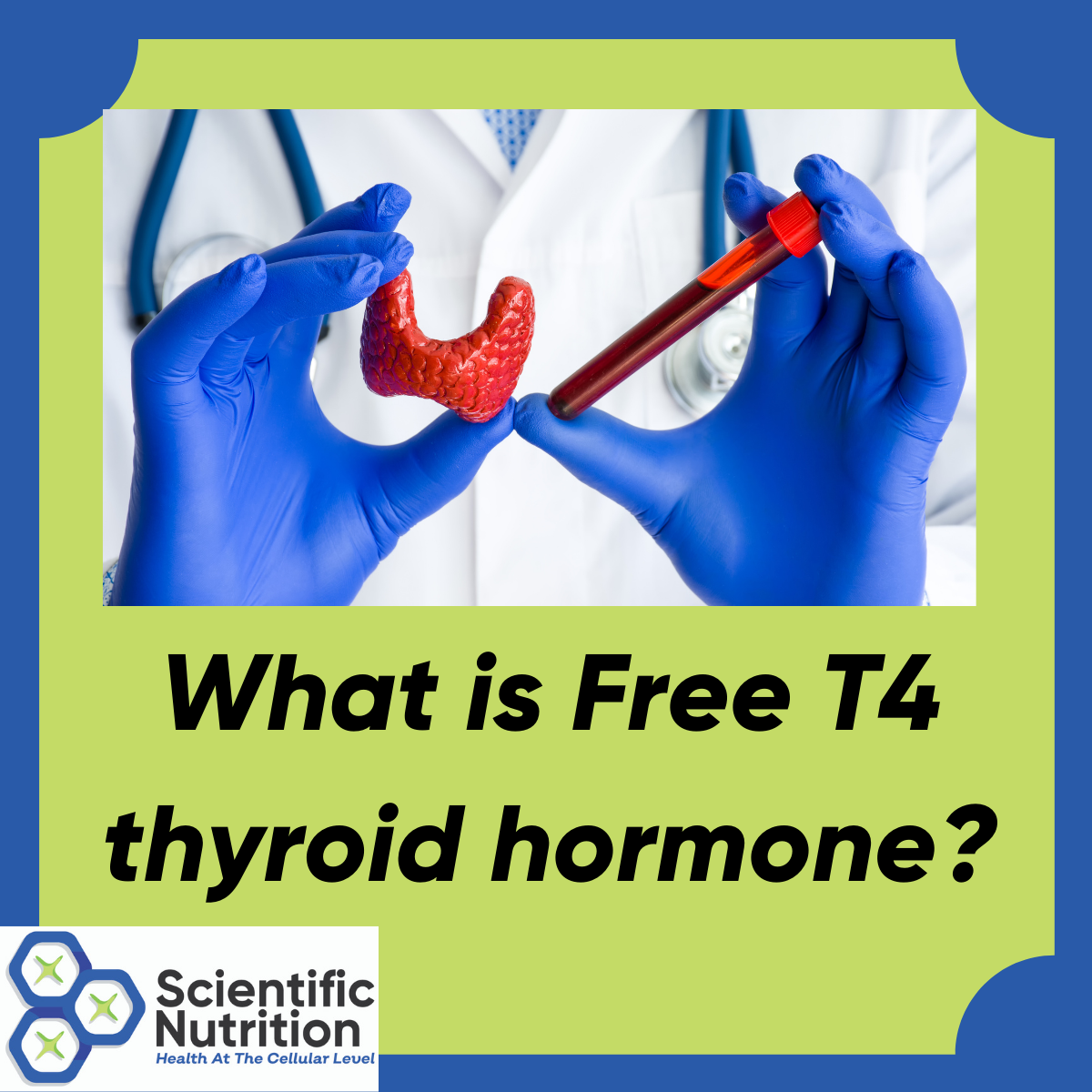 What is your Free T4 hormone and why should you care?