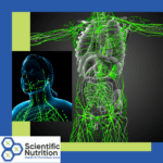 What does your Lymphatic System and Lymph Nodes do?