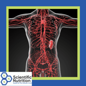 Lymphatic system and lymph nodes are your body's cleanser
